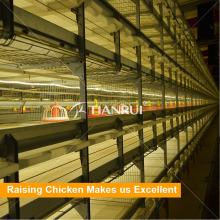Высокое качество автоматический птицы оборудование для бройлеров используется в курятник