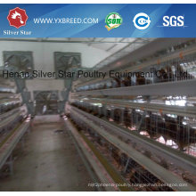 South American Automatic Chicken Poultry Equipment for Layers and Broiler