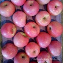 Buena calidad de manzana Qinguan fresca
