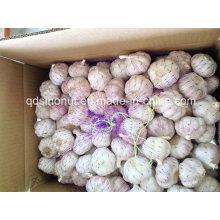 Китай Красный чеснок 6.0cm
