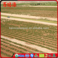 Bairuiyuan Goji berry berries goji gnc de goji Great as a snack