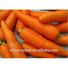 Wholesale Chinese fresh carrot price