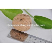 Nogueira natural seca HACCP ISO