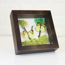 Custom wood frame display Fresh flowers plant Butterfly specimens shadow box frame with Glass Front