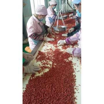 Organische Goji Berry USDA zertifiziert, Ningxia Goji Beere, Chinesische Wolfberry