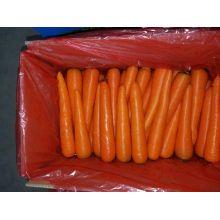 Carotte fraîche (taille de S / M) dans 10kg / Carton ou 6.5kg / Carton pour le marché de Singapour