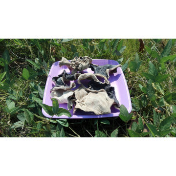 White Back Black Fungus with ISO