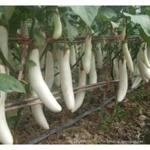 HE04 себе длинные белые гибридные семена баклажанов для посадки