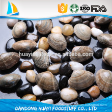 sand out/sand free/without sand short necked clam with shell