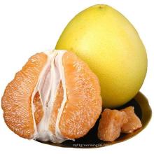 High Quality Sweet Fresh Citrus Grapefruit Honey Golden Pomelo