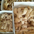 Top Quality of Fresh Air Dry Ginger for Europ