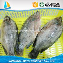Fournissent un bon prix tilapia viande et fruits de mer congelés