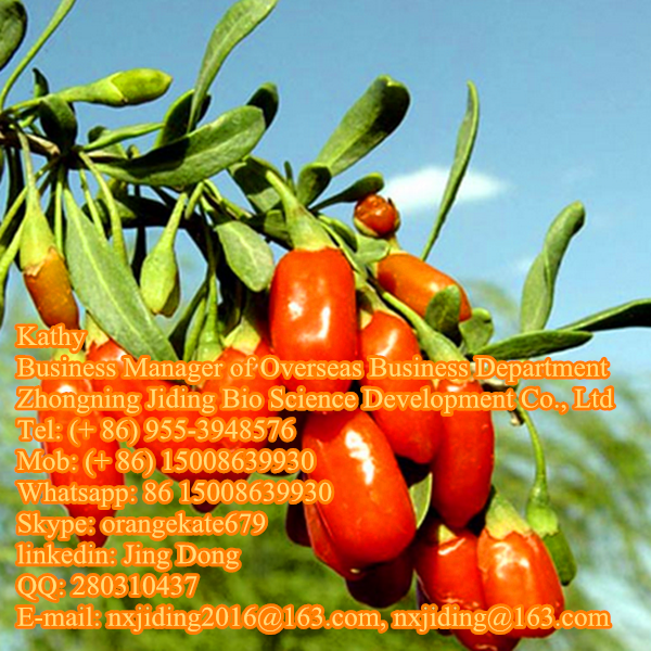 Goji berry manufacturer