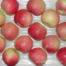 Gala vermelha fresca chinesa Apple do pomar a seu armazém
