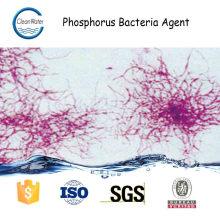 Agente de Bacterias Fósforo Tratamiento de aguas residuales municipales de enzima