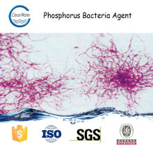 Phosphorus Bacteria Agent Municipal Wastewater Treatment of enzyme