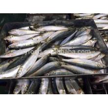 Poisson de sardine entier frais et congelé