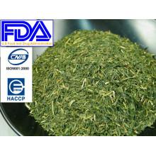 Rich Taste Unique Antioxidants Sencha Green Tea