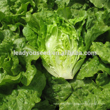 MLT02 Xinpin green wrinkled leaves high yield lettuce seeds china