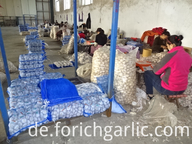 Good Quality Normal White Garlic From Jinxiang