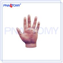 ПНТ-AM25 модель Акупунктурой человеческая рука 15см