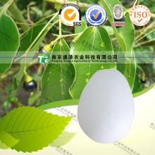 Natural Herbal Raw Material Camphor
