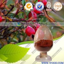 Extrait 100% naturel de hanche de Rose de haute qualité de produit de soins de santé