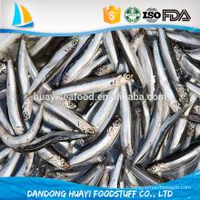 2016 nouveau poisson d'anchois d'atterissage
