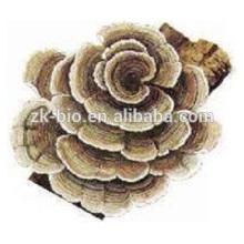 Mushroom extract powder coriolus versicolor polysaccharide