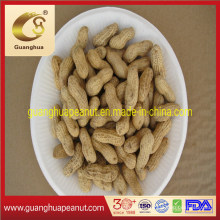 Hot Sale Peanut in Shell at Bulk Price