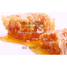 jujube blossom honey