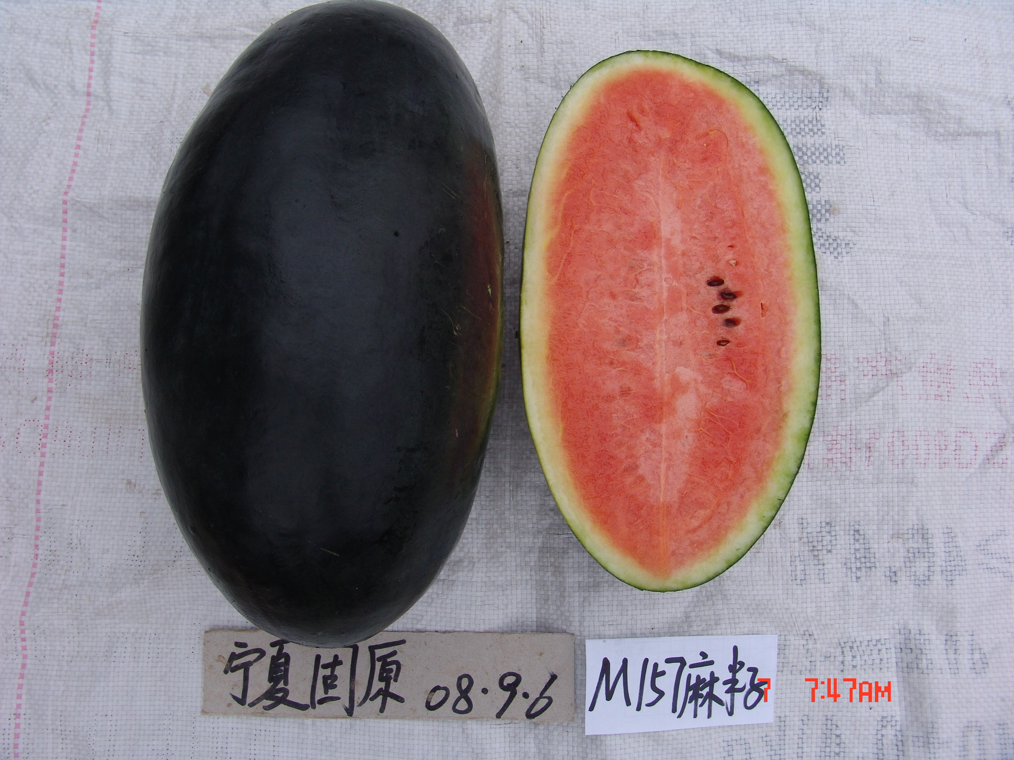 Black Watermelon Seeds for Planting
