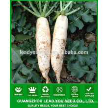 NR01 Norma Quality radish seeds factory