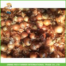 Fresh Onion Yellow Color Top Quality Fresh Onions