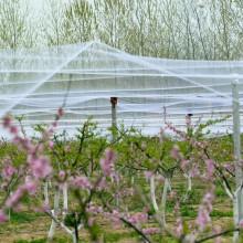 Gardens Bird Netting Keeps Pest Birds Out