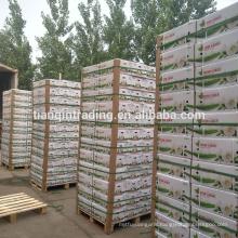 China garlic manufacturer