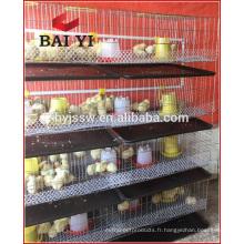 Cage de poulet de ferme de volaille de vente chaude pour les poussins d'un jour vieux