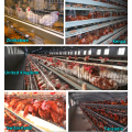Chicken Cage System Poultry Farm Equipment
