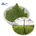 Food Grade Matcha Green Tea Powder Matcha Powder