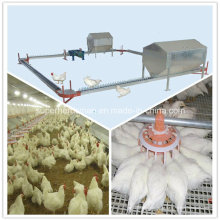 Equipamento de avicultura de criação de camadas