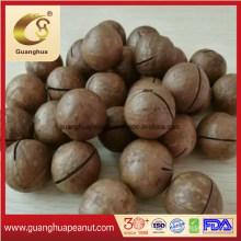 Hot Sale Big Size Macadamia Nut