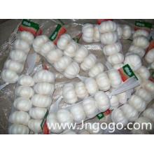 Nova colheita de boa qualidade fresca exportação alho branco