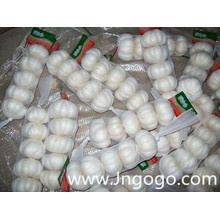 New Crop Fresh Good Quality Export White Garlic