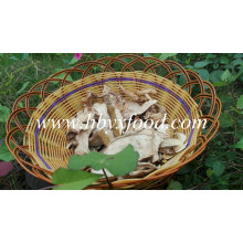 Dried White Button Porcini Mushroom with Market Price