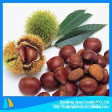 2014 New natural fresh chestnut