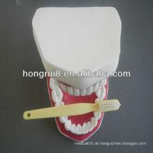 2013 HOT SALE 32/28 Zähne Zahnpflege Modell