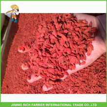 Top Quality Ningxia Dried Goji Berry 180Grains/50G
