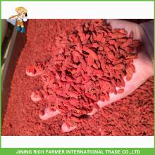 Qualidade superior Ningxia seca Goji Berry 180Grains / 50G