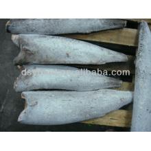 Oilfish for Sale