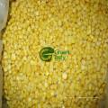 Vente chaude non maïs OGM maïs sucré en conserve